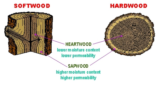 Hardwood And Softwood Trees ~ Latest news from buy qld timber